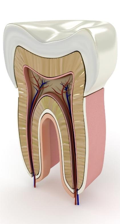 endodoncia1